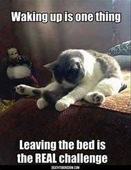 Sleeping Cat Meme - best 25 ideas about funny cat memes find what you ll love