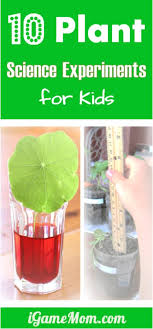 Plant Science Experiments For Kids - Simple kitchen science experiments