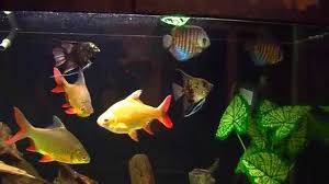 100 fish tank in living room nature fish tank decorating