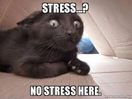 No Meme Cat - stress no stress here schitzo cat make a meme