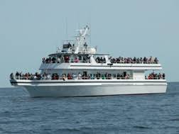 Whale Watches Cape Cod - white cap charters cape cod cape cod private whale watching