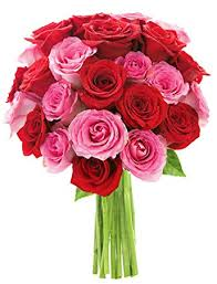 Long Stem Rose Vase Amazon Com Bouquet Of Long Stemmed Red And Pink Roses Two Dozen