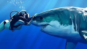 sharks love to be petted they u0027re like dogs youtube