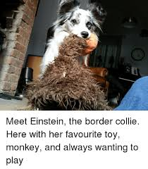 Border Collie Meme - border collie and border collie meme on sizzle