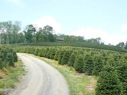 christmas christmas tree farms near mercer mochristmas memphis