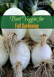 Fall Vegetable Garden Plants by What To Plant Now For A Fall Vegetable Garden Gardens Raised