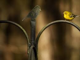 Audubon Backyard Bird Count by In The News Audubon North Carolina
