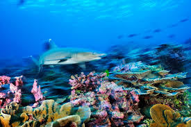 pacific nation bans fishing in one of world u0027s largest marine parks