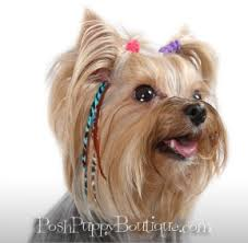 feather hair extensions dog pet feather hair extensions accessories wigs posh puppy