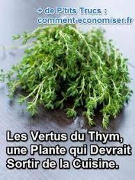 thym serpolet cuisine thym serpolet thymus vulgaris thymus vulgaris