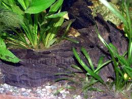Aquarium Decorations An Article And Discussion About Decorating Fish Tanks