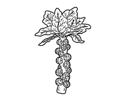 Brussels Sprout Coloring Page Coloringcrew Com Sprout Coloring Pages