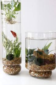 Home Decor Glass 27 Indoor Water Garden Ideas Small Garden Ideas