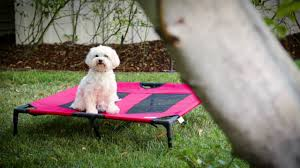 how to create a pet friendly yard youtube