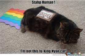 Cat Toast Meme - nyan cat shit rainbow puke poker face memes best collection of