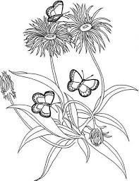 rainforest butterfly and flower coloring page download u0026 print