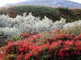 tundra native plants tundra havumetsä lehtimiestä välimerenkasvillisuus he