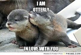 Sea Otter Meme - sea otter wallpaper