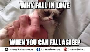 Good Meme Grumpy Cat - grumpy cat memes cat breed selector