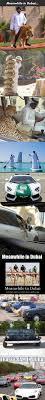 maserati of marin maserati dealership best 25 maserati dealership ideas on pinterest supercar