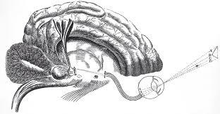 constructing the modern mind scientific american