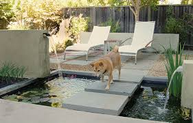 backyard ideas for dogs 8 great backyard ideas to delight your dog the bark