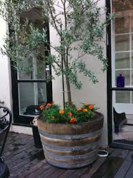 Half Barrel Planters by Best 25 Wine Barrel Planter Ideas On Pinterest Wine Barrel