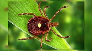 mild winter could lead to an increase in the local tick population