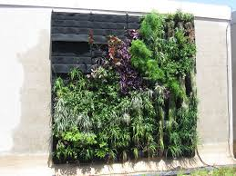 terrific living wall succulent plants courtesy of green roof