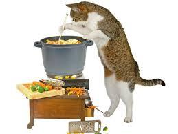 alimentazione casalinga gatto ricette faidate per gatti
