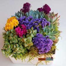 succulent arrangements succulent arrangement succulents