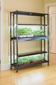 light requirements for growing tomatoes indoors fluorescent grow light systems for seed starting growing tomatoes