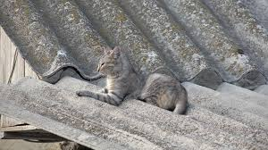 Rustic House Cat On The Roof Of Rustic House At Countryside Stock Video Footage