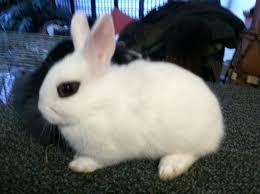 sonoma county u2013 trickster hares
