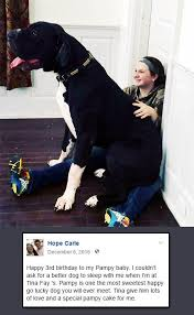Four legged friends and enemies New Hampshire Tina Fay is