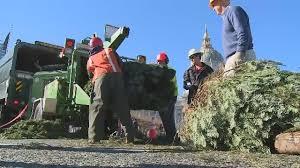 san francisco kicks off christmas tree recycling program with