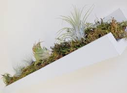 ikea ledge weekend whimsy ikea hack for air plants a spoonful of pretty