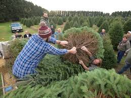 home depot fraser fir christmas tree black friday 2015 handy dandy list of christmas tree farms lots