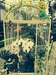 Family Pet And Garden Center - orchids garden centre u0026 nursery