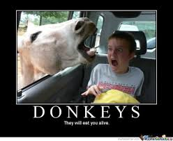 Funny Donkey Memes - damn thats a cold ass donkey funny meme picture