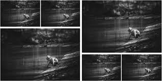 lightroom collage templates u2014 kelly jacobi photography