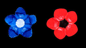 poppy and bleuet de france for remembrance day youtube