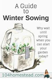 winter sowing involves sowing the seeds outdoors in miniature
