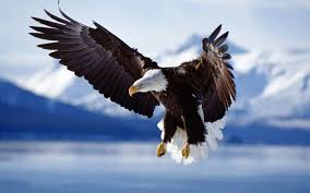 Bald Eagle And American Flag American Flag And Eagle Wallpaper