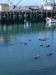 california central coast views wildlife u0026 dairy free eats