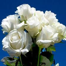 global roses cheap amazing white roses global tea