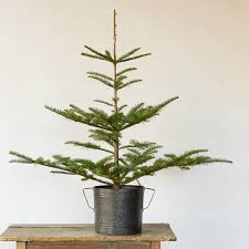 10 easy pieces tabletop christmas trees gardenista