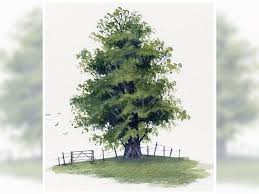 watercolour tutorial painting a realistic tree