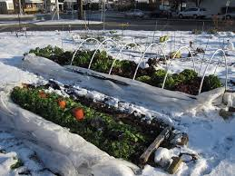 Winter Gardening Ideas 10 Winter Gardening Ideas And Tips For Flawless Results