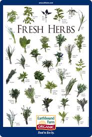 herb chart downloads fresh herbs herbs and chart